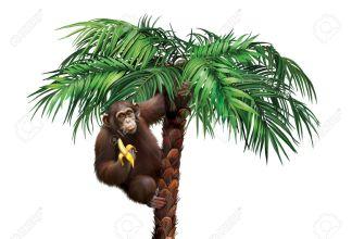 18425373-Brown-scimmia-sulla-palma-di-mangiare-una-banana-Archivio-Fotografico.jpg